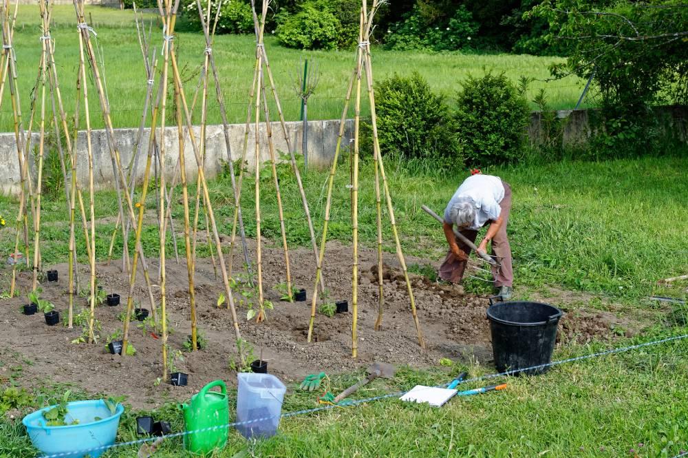 Tuteurs à tomates en bambou sous forme de Tipi