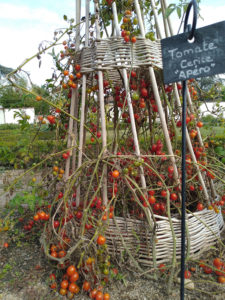 Tuteur à tomate Tipi en osier